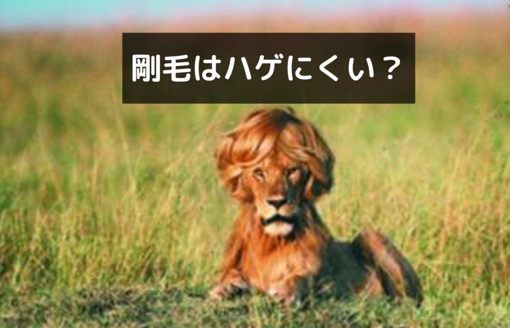 剛毛は軟毛よりハゲにくい?